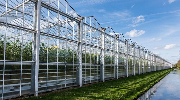 IMR Advies Helpt Bedrijven In De Tuinbouwsector Aan HORTIQ Certificering